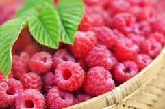 Basket of fresh ripe sweet raspberries stock images