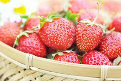 Basket of fresh ripe sweet strawberries with daisies royalty free stock image