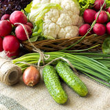 Basket with fresh spring vegetables. Basket with vegetables such like  lettuce, cucumbers, onions, chives, cauliflower, radish Royalty Free Stock Images