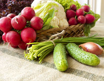 Basket with fresh spring vegetables. Basket with vegetables such like  lettuce, cucumbers, onions, chives, cauliflower, radish Stock Image