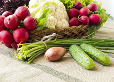Basket with fresh spring vegetables. Basket with vegetables such like  lettuce, cucumbers, onions, chives, cauliflower, radish Royalty Free Stock Image