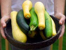 Basket of Fresh Squash. Person presenting basket of garden fresh squash and zucchini Stock Images