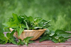 Basket of fresh stinging nettle leaves. On wooden table stock images