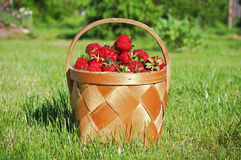 A basket of fresh strawberries with green grass Stock Photos