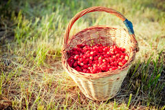 Basket of fresh strawberries Royalty Free Stock Images