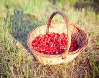 Basket of fresh strawberries Royalty Free Stock Photo