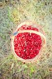 Basket of fresh strawberries Stock Photography