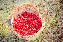 Basket of fresh strawberries Royalty Free Stock Image