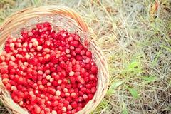 Basket of fresh strawberries Stock Image