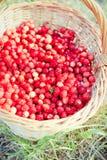 Basket of fresh strawberries Stock Images