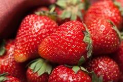 Basket of fresh strawberry harvest, bio dessert delicious.  stock image