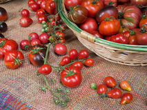 Basket of fresh tomatoes, many varieties. Stock Photography