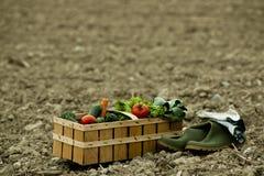 Basket of fresh vegetables Royalty Free Stock Photos