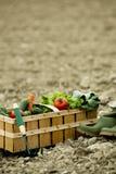 Basket of fresh vegetables Stock Photos