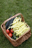 Basket with fresh vegetables Royalty Free Stock Photo