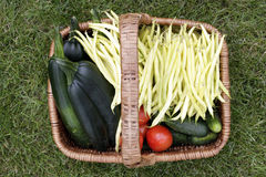Basket with fresh vegetables Stock Photography
