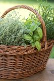 Basket with fresh verbs Royalty Free Stock Image