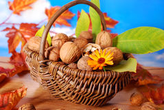 Basket with fresh walnuts Stock Photos