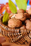 Basket with fresh walnuts Royalty Free Stock Photo