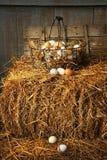 Basket of freshly laid eggs lying on straw royalty free stock photos