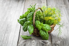 Basket of freshly picked herbs including basil, rosemary, dill a Royalty Free Stock Photography