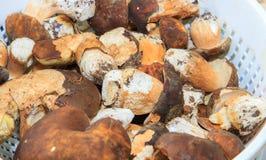 Basket of freshly picked mushrooms Stock Photography