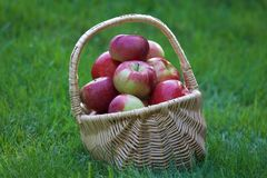 Basket of Apples Royalty Free Stock Photos