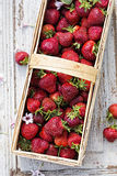 Basket with freshly picked strawberries stock photos