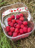 Basket of fresly picked Raspberries. Bright red raspberries freshly picked by customer at a Pick Your Own Field in Leeds, United Kingtom stock photo