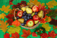 Basket of fruit royalty free stock photography
