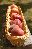 Basket of fruit. Food, gastronomy, cooking,cookery Royalty Free Stock Photography