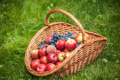 Basket with fruit on a green grass Stock Images