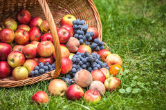 Basket with fruit on a green grass Royalty Free Stock Photo