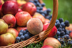 Basket with fruit on a green grass Stock Photo