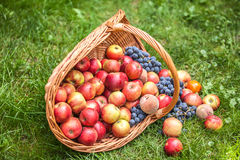 Basket with fruit on a green grass Royalty Free Stock Photos