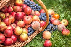 Basket with fruit on a green grass Stock Photography