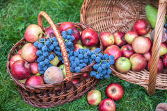Basket with fruit on a green grass Royalty Free Stock Images