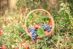 Basket with fruit on a green grass Royalty Free Stock Photography