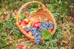 Basket with fruit on a green grass Stock Image