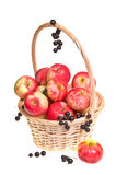 Basket with Fruit Harvest Royalty Free Stock Images