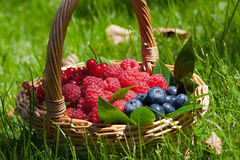 Basket with fruit. A straw basket with fresh summer fruit Royalty Free Stock Photo