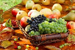 Basket of fruits. Stock Photo
