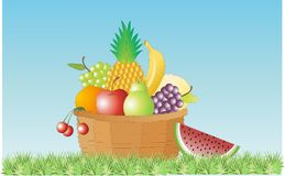 Basket of fruits. A basket of fruits placed amidst nature Stock Image