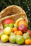 Basket of fruits. Composition with varied fruits and basket outdoor with natural background Stock Photos
