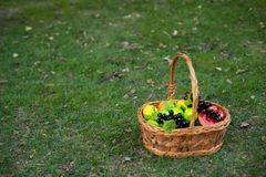 Basket of fruits in the garden royalty free stock photo