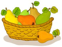 Basket with fruits, pears. Wattled basket with fruits, sweet pears with green leaves Stock Photos