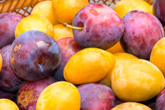 Basket of fruits, yellow and purple plum. Stock Photography