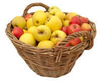 Basket full of apples Stock Photo