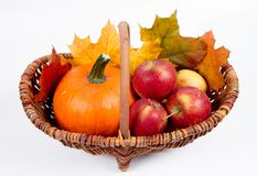 Basket full of apples and a pumpkin. With some maple leaves on a white background royalty free stock photos