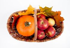 Basket full of apples and a pumpkin. With some maple leaves on a white background royalty free stock images
